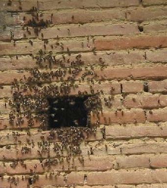 Problème d'insecte derrière le mur de maçconnerie